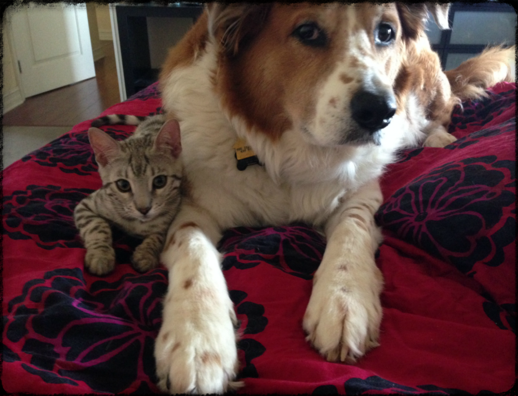 dog and cat best friends joyish